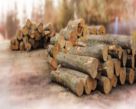 Spec-Wood