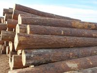 Hangzhou Yuanshun Wood Product Co., Ltd.