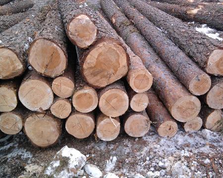 The Wood Company Poland - REFUSED - ZAWIESZONY DOSTĘP