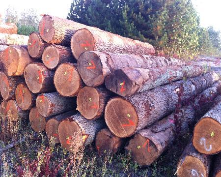 Westwood Logs BV