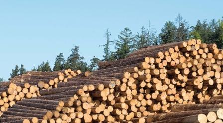 German Sawmills suffer under Log prices
