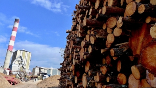 Where is the industrial timber market heading in France?