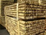 Poland Softwood Logs - Cylindrical trimmed round wood, Pine