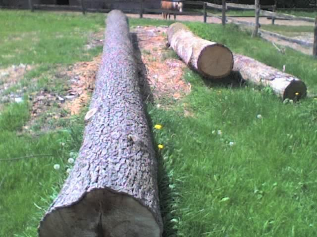troncos para chapa de madera