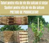 Hardwood  Logs - 20+ cm, Acacia, Cylindrical trimmed round wood, Romania, mehedinti