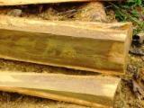 Tropical Wood  Logs - CE, 40-120 cm, Teak, Industrial Logs, Central America, Central America