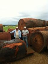 Forest and Logs - CoastEcoTimber Underwater Logging FSC Exotic woods - Panama