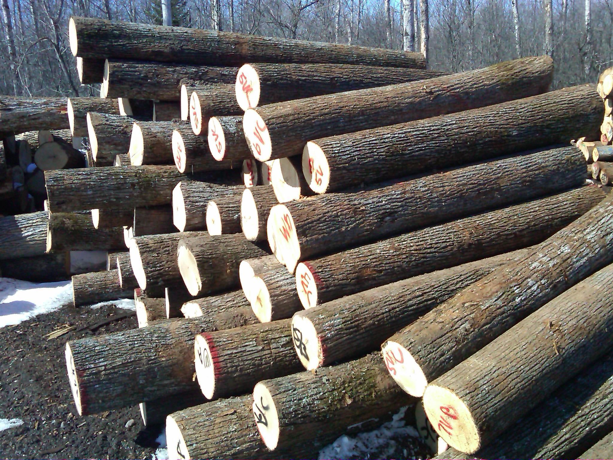 Basswood Veneer Logs Woodworking Class In The Woodlands