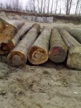 Hardwood  Logs Poland - Oak , alder , ash , beech logs
