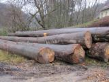 European beech logs