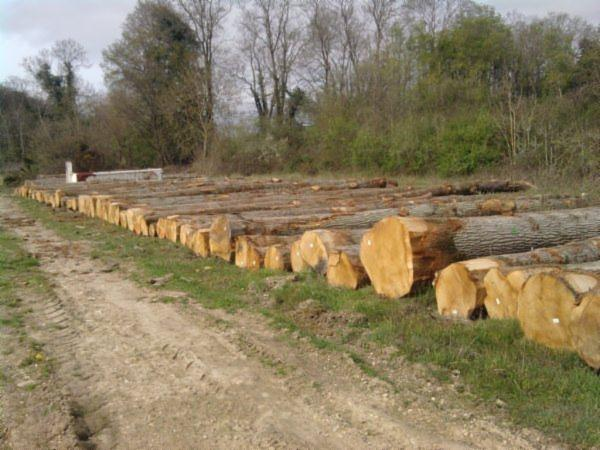 Wholesale PEFC/FFC a/b/c 40 cm Oak Saw Logs from France
