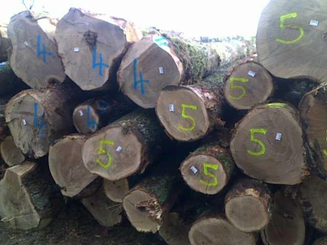 PEFC/FFC 40 cm Oak Saw Logs from France
