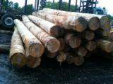 All Coniferous 25+ cm ABC Saw Logs from USA