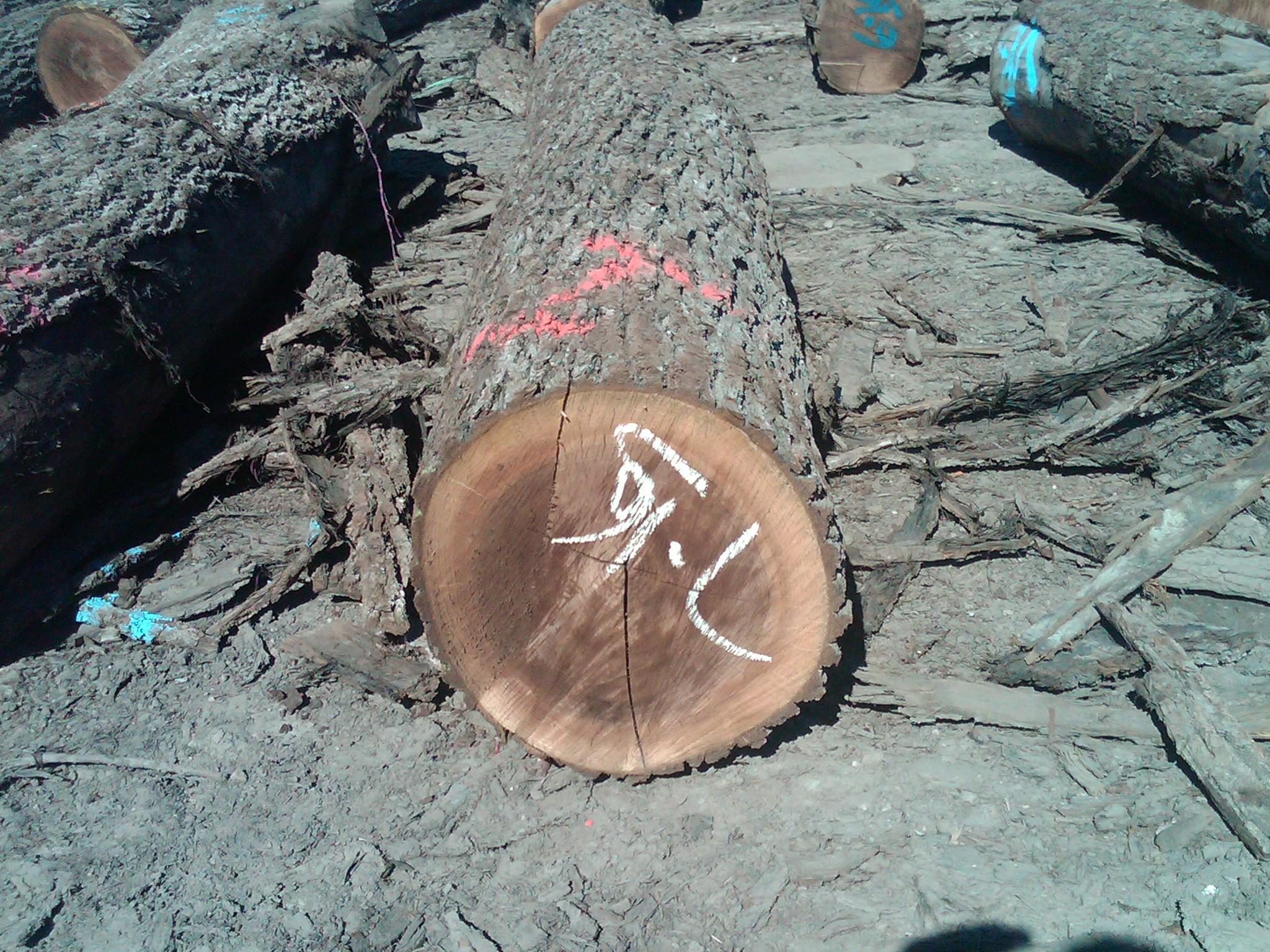 锯材级原木, 胡桃木(美洲黑色)