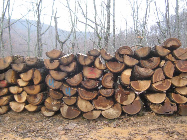 firewood, Beech/Oak