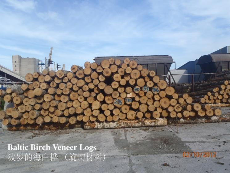 saw logs
