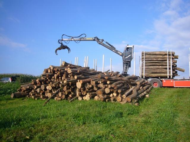 Hetre Bois De Chauffage : Grumes Pour Bois De Chauffage H?tre Europe Pictures to pin on