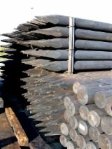 Softwood  Logs ISO-9000 For Sale -  cylindrical trimmed round wood, Spruce (Picea abies) - Whitewood, PEFC/FFC