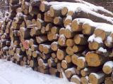 Netherlands Hardwood Logs - 8+ cm Beech (Europe) Firewood from Germany