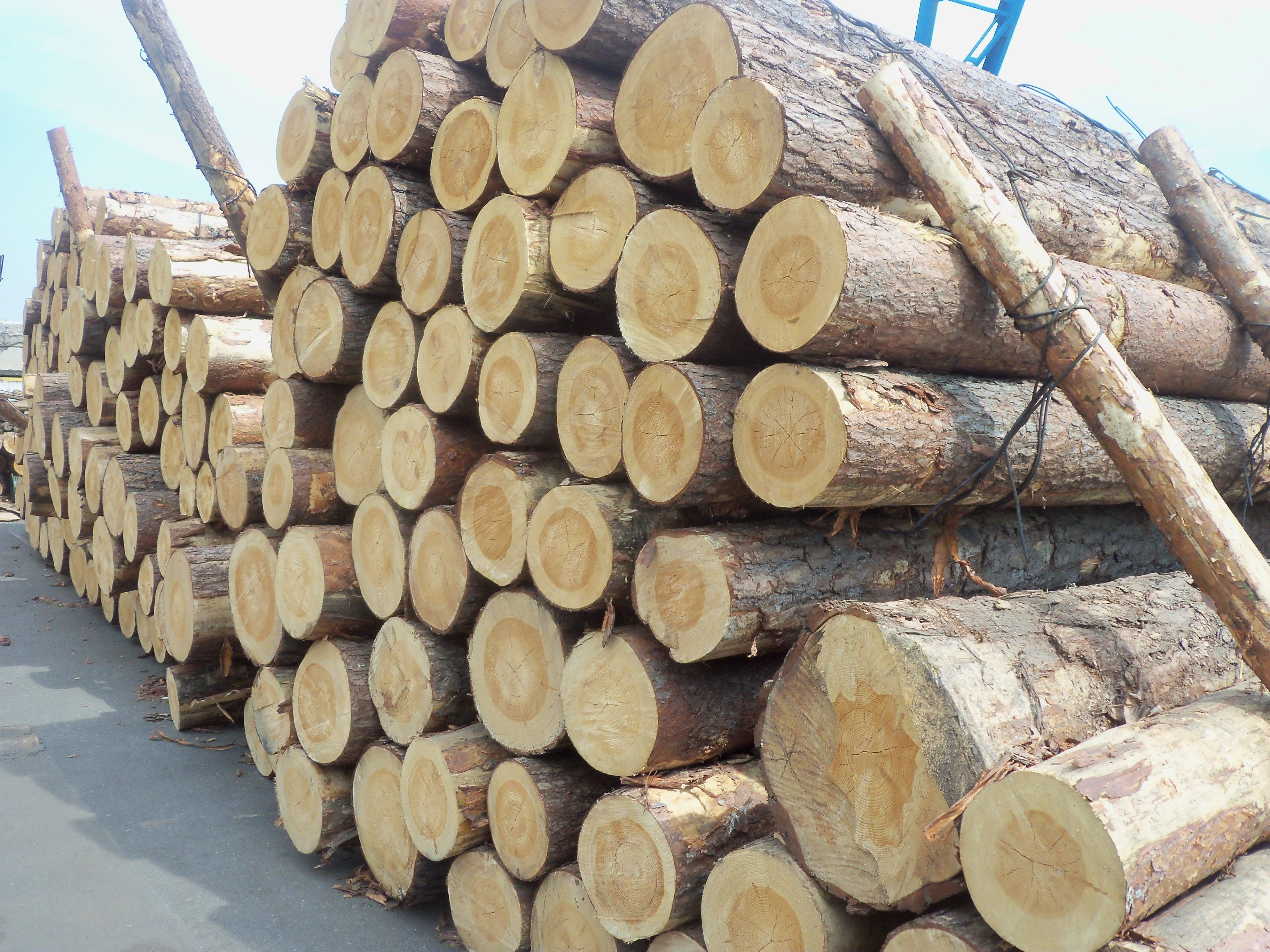 Pine wood logs, bark-on, fresh cut