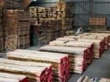 Hardwood  Unedged Timber - Flitches - Boules Lithuania - Loose, Sycamore (North America), PEFC/FFC