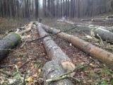 Wälder und Rundholz - Schnittholzstämme, Pappel, PEFC/FFC