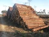 Softwood  Logs ISO-9000 For Sale - Saw Logs, Pinus silvestris / pinus pinaster, PEFC/FFC