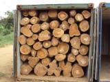 Teak (Tectona Grandis) Logs - Origen Ecuador & Panama - Maderasudamer