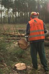 Forest Services - Forest maintenance, Germany