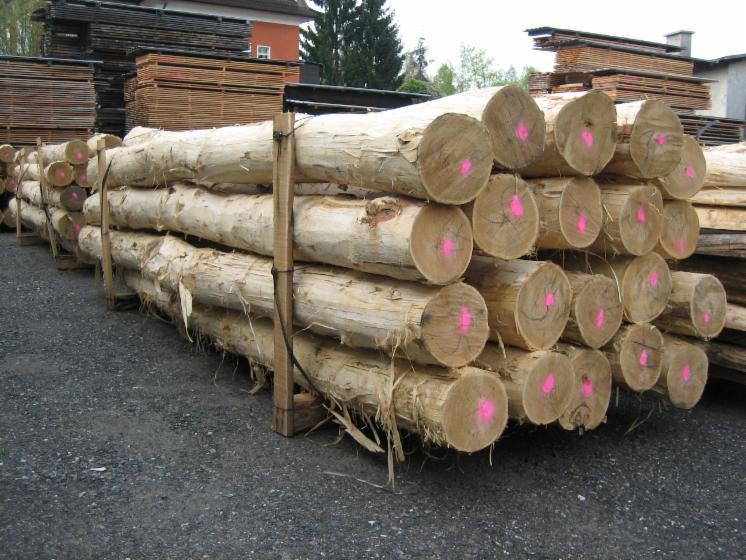 Acacia-Saw-Logs