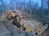 SELLL White OAK logs for Flooring and Furniture