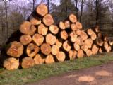 Hardwood  Logs - PEFC/FFC, 35+ cm, Oak (European), Saw Logs, France