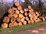 PEFC/FFC 35+ cm Oak (European) Saw Logs from France
