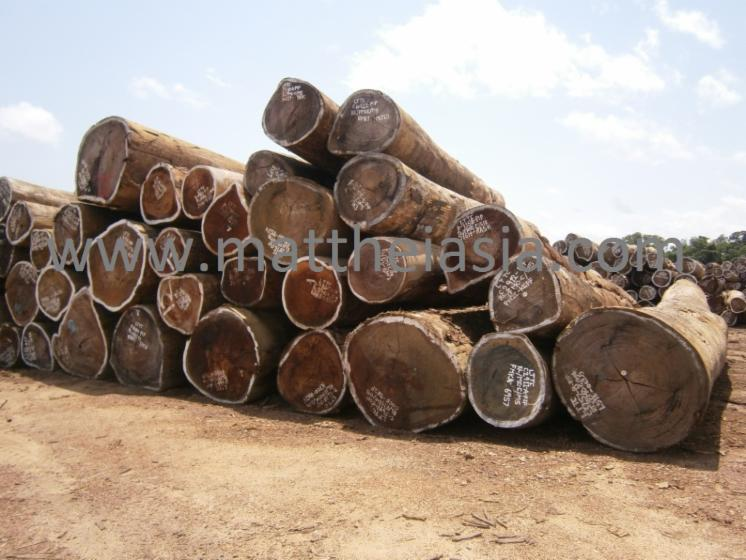 industrial logs, Mixed tropical species