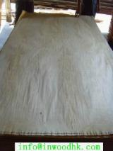 Birch  Rotary Cut Veneer - 0.18 mm Natural Rotary Cut Birch Veneer for Plywood