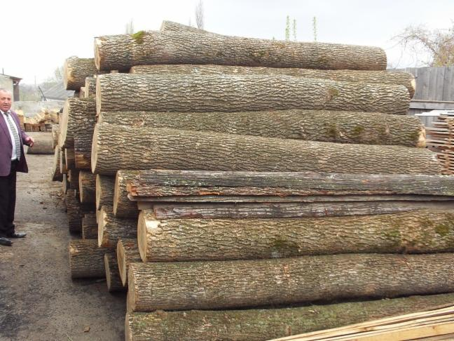 Round Logs On Sale Of Ashoakelmacaciacarpin