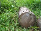 ISO-9000 Certified Tropical Logs - ISO-9000, Standard, 60 cm, Teak, Saw Logs, Panama, INTERIOR