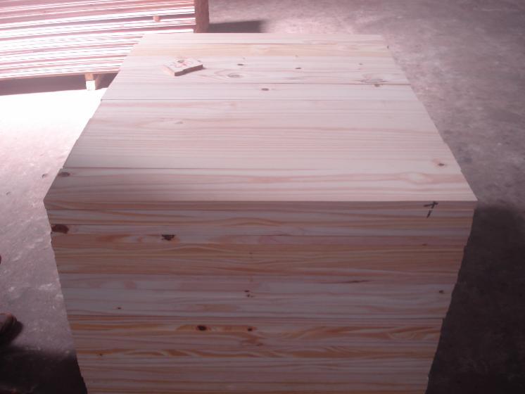 Taeda Pine