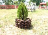 Prodotti Per Il Giardinaggio In Vendita - Abete (Picea abies) - Legni bianchi, Fioriera - Vaso per Fiori, iso 9001