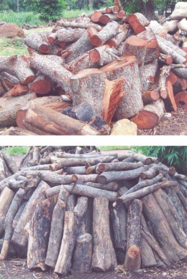 firewood, Iroko (Mvuli, Kambala, Semli, Rokko)