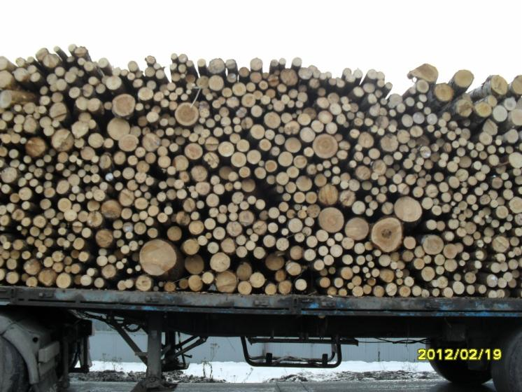 Firewood cleaved   not cleaved, Firewood/woodlogs not cleaved