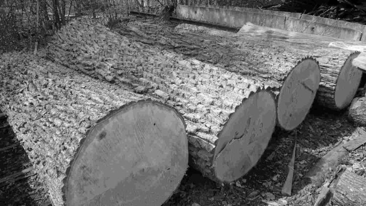 Spruce--pine--larch--oak--beech--ash-lumber