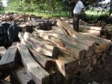 Cocobolo Dalbergia retusa la mejor calidad desde Nicaragua