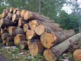 PEFC/FFC Certified Hardwood Logs - Sell WHITE OAK logs for flooring and furniture