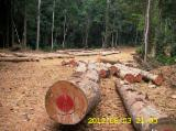 Tropical Wood  Sawn Timber - Lumber - Planed Timber - Sawn Okoume timber