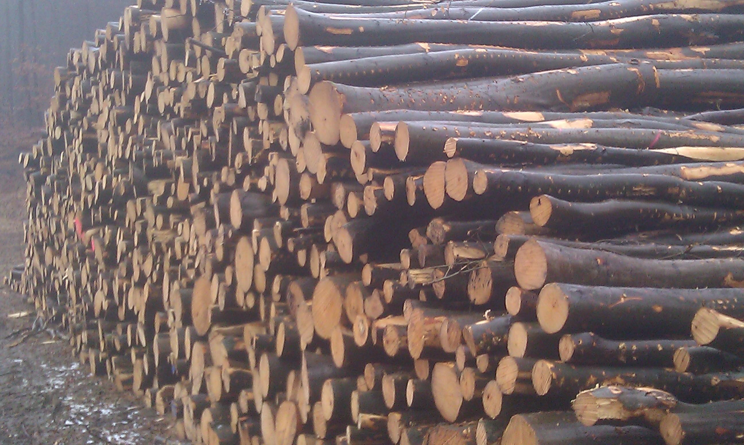 Importatori legna da ardere
