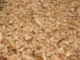 Pellets - Briquets - Charcoal, Wood Chips From Sawmill, All specie