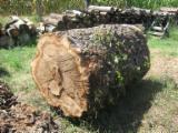 Commerce Bois Déroulés, Déroulage - Vend Déroulage Peuplier Noir Déroulé, Figuré