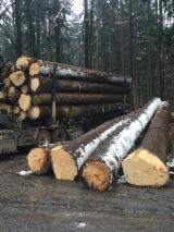 Poland Softwood Logs - (Picea Abies) whitewood