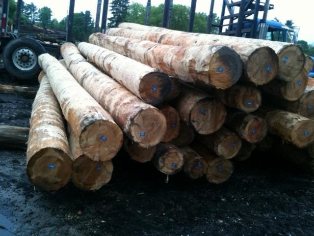 Hemlock---Poplar-Industrial-Logs-20-